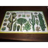 Anteojito Antigua Lamina Las Plantas Suculentas Szw