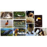 Brasil 10 Tarjetas Telefonicas Tematicas De Aves