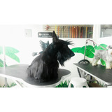 Hermoso Terrier Escocés O Scottish Terrier Negro Para Montas