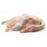 Patos Criollos Faenados O Vivo
