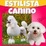 Aprende Peluquería Canina Profesional Video Estilista Canino