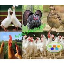 Kit Aprende Cría Aves Pavos Gallinas Patos Pollos Codorniz
