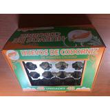Envases Plásticos Para Huevos De Codorniz X 40 Unidades