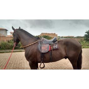 Cavalo Mangolino Com 4 Anos De Marcha Picada