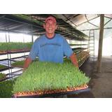 Bandejas Para Forraje Verde Hidroponico X 10 Unidades