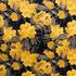 Floral Amarelo e Preto