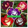 Semillas De Rosas Osiria + Manual De Cultivo Mix De Colores