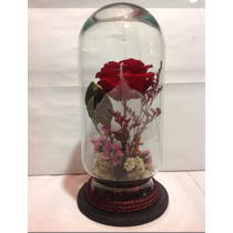 5 Rosas Eternas,chicas, Preservadas, Envío Express Gratis