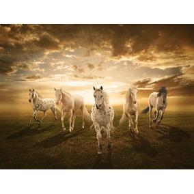 Hermosos Caballos Blancos En Canvas De 100x70 Cm - Exelente