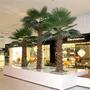 Semillas Certificadas Palma Abanico, Bonsai