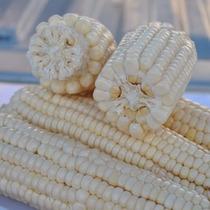 Semilla De Maíz Híbrido Blanco Grano/forraje Valles Altos
