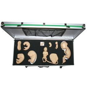Simulador Del Desarrollo Embrionario Educacion Aprendizaje