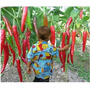 25 Sementes De Pimenta Orgânica Gigante Ate 50 Cm Promoção