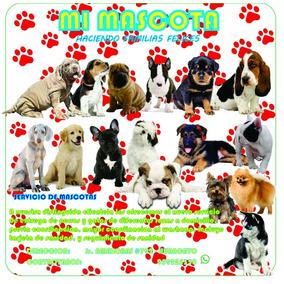 Cachorros Adorables