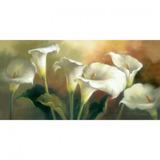 Tela Pintura 100x50 Copo De Leite Branco