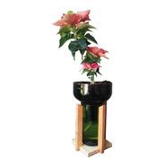 Planta De Interior Flor Del Inca Little Plant 27 Con Soporte