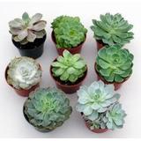 Mini Cactus Y Mini Suculentas Coleccion Recuerdos Souvenir