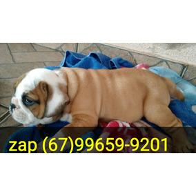 Lindos Bulldog Inglês 2.400 Com Envio Incluídos En Tdo Brasi