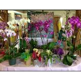 Arreglos Orquideas Naturales Para Regalo