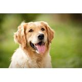 Perrarina Marca Dog Chow De 4kg
