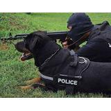 Estou Aceitando Doação De Cachorros Pitbull Ou Rotwailler ..