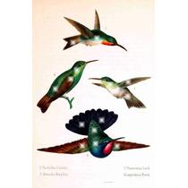 Lienzo Tela Aves De México Colibries 3 1875 80 X 50 Cm Arte
