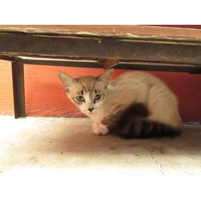 Gatitos En Adopción. (leer Condiciones De Adopción)