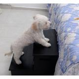 Escaleras De Madera Con Cajoneras Para Perros Y Otras Mascot