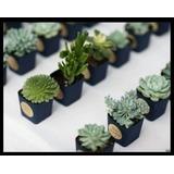Souvenir Tunas, Cactus, Suculentas. Precio Promo Primavera!!