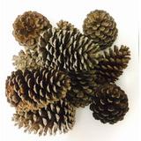 Pinha Natural Decoração Artesanato Natal - 50 Und + Frete