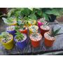 Souvenir Suculentas Cactus Regalos Empresariales