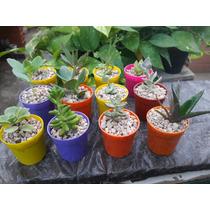 Souvenir Suculentas Cactus Dia Del Maestro