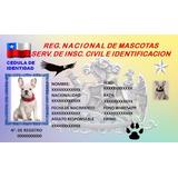 Carnet Para Mascotas En Credencial De Pvc Full Color
