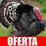Aprende Avicultura Especial Cria De Pavo, Envio Gratis 132