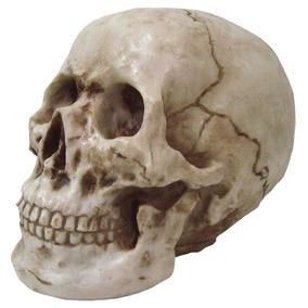 Cranio Caveira Tamanho Real Em Resina (fabricaçao Propria )