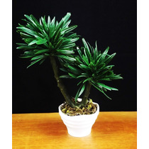 Bonsai Mini Palmeira - Vasos Árvores Arranjos Artificiais