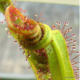Sustrato Tierra Para Planta Carnivora Cactus Bulbo Raices