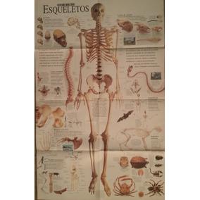 Poster Folha De S. Paulo - Esqueletos