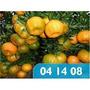 Adubo Químico Npk 4-14-8 Para Flores E Frutos 10 Kg