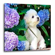 3drose Dpp_80886_3 Adorable Bichon Frise Cachorro Entre H