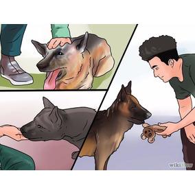 Cão Seu Cachorro Filhote Ou Adulto Adestramento Via Ebook