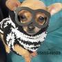Lindos Cachorros Chihuahuas Cabeza De Venado Y Manzana