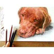 Retratos - Dibujos A Lápiz De Personas O Mascotas Perros