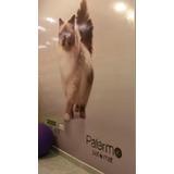 Royal Canin Siamese 7.5 Kg Envío S/c Ver Zona