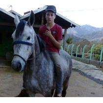 Cavalo Mangualarga Mineiro