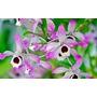 Oferta Coleccion 6 Especies Orquideas Bromelias Cactus