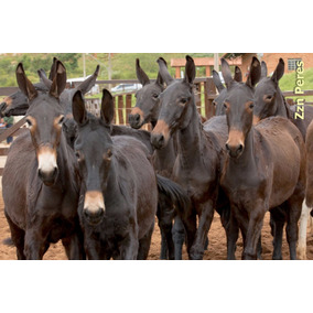 Núcleo Engorda Cavalos - Equicav Mulas 10kg