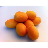 Muda De Laranja Kinkan (doce) Enxertada (produz Rapidamente)