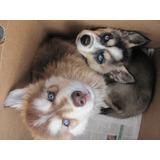 Papel De Parede Auto Adesivo Decoração Cachorros 7m2