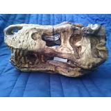 Adorno Acuario Resina Cráneo T Rex